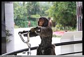 2015-01-17 動物園慢遊:2015-01-17 動物園慢遊(成成)075.JPG