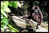2020-03-15 動物園趴趴走:2020-03-15 動物園一日遊019.JPG