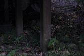2014-04-19 螢火蟲初體驗-和美山:2014-04-19 螢火蟲-碧潭040.JPG