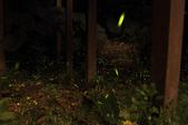 2014-04-19 螢火蟲初體驗-和美山:2014-04-19 螢火蟲-碧潭071.JPG