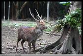 2015-01-17 動物園慢遊:2015-01-17 動物園慢遊(成成)013.JPG