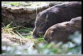 2015-01-17 動物園慢遊:2015-01-17 動物園慢遊(成成)019.JPG