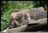 2015-01-17 動物園慢遊:2015-01-17 動物園慢遊(成成)059.JPG