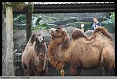 2015-01-17 動物園慢遊:2015-01-17 動物園慢遊(成成)129.JPG