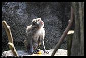 2017-08-13 動物園排毒去:2017-08-13 動物園010.JPG
