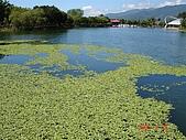 2008-08-20花東金針花三日遊:015.JPG