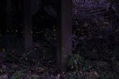 2014-04-19 螢火蟲初體驗-和美山:2014-04-19 螢火蟲-碧潭044.JPG