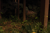 2014-04-19 螢火蟲初體驗-和美山:2014-04-19 螢火蟲-碧潭073.JPG
