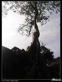 2007暑前進吳哥窟:1904998221.jpg