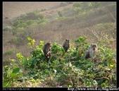 2008暑前進巴里島:1919164307.jpg