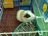 天豬:DSC01408.JPG