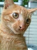 可愛的Kitty:DSCF0125
