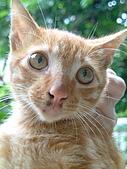 可愛的Kitty:DSCF0126