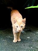 可愛的Kitty:DSCF0127