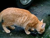 可愛的Kitty:DSCF0128