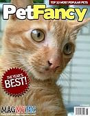 可愛的Kitty:kitty封面.jpg