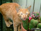 可愛的Kitty:204351920_1013009.gif
