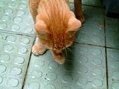 可愛的Kitty:2007-09-05
