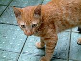 可愛的Kitty:DSCF0120