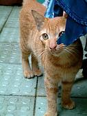 可愛的Kitty:DSCF0121