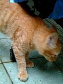 可愛的Kitty:DSCF0122