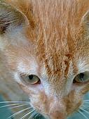 可愛的Kitty:DSCF0124