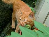 可愛的Kitty:DSCF0131