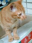 可愛的Kitty:DSCF0140