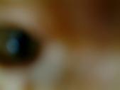 可愛的Kitty:DSCF0141