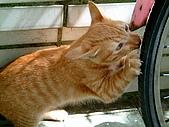 可愛的Kitty:DSCF0144