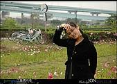 2008/3/16 疏洪道波斯菊:010.JPG