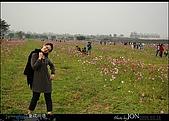 2008/3/16 疏洪道波斯菊:012.JPG