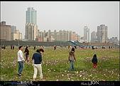 2008/3/16 疏洪道波斯菊:016.JPG
