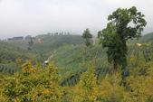 2011南投八卦茶園與忘憂森林及銀杏森林旅拍:IMG_9014.jpg