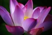 2015 白河蓮花:IMG_2383-1.jpg