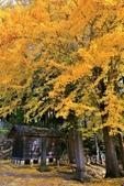 2017 福島大內宿好楓景:IMG_7317 - 複製.jpg