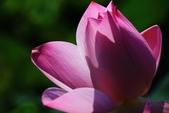 2015 白河蓮花:IMG_2420-1.jpg