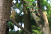 2011再訪中正紀念堂五色鳥(飛行版):IMG_5980.JPG