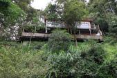 2011南投八卦茶園與忘憂森林及銀杏森林旅拍:IMG_8938.jpg