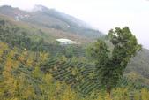 2011南投八卦茶園與忘憂森林及銀杏森林旅拍:IMG_9012.jpg