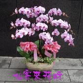 仙客來花坊:O-266(G).jpg