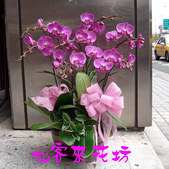 仙客來花坊:O-273(G).jpg