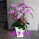仙客來花坊:O-254(G).jpg