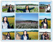 台中新社花毯節:2013-11-24新社花毯節