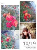 台中大里運動公園:2015-10-19