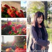 台中大里運動公園:20150216