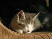 可愛小動物:流浪貓的街角m