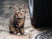 可愛小動物:流浪貓的街角q