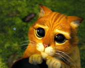 可愛小動物: