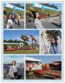 台中新社花毯節:2013-11-24新社花毯節 013_副本.jpg